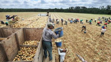 Photo of Workers Claim Race Bias as Farms Rely on Immigrants
