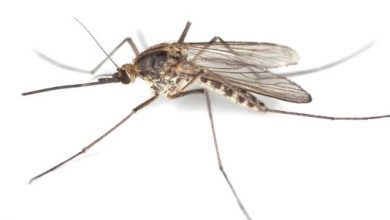 Photo of What Makes You So Tasty to Mosquitoes?