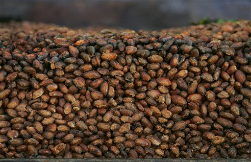This Thursday, Nov. 24, 2005 file photo shows organic cocoa beans in storage at a factory in Ocumare de la Costa, 100 kilometers (60 miles) west of Caracas, Venezuela. (AP Photo/Fernando Llano)