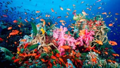 Photo of Coral Reefs Yield New Proteins to Tackle HIV