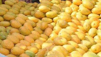 Photo of FDA: Organic Mangoes Recalled, Possibly Tainted With Listeria