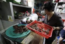 Photo of A Flavor Out of Favor: Dog Meat Fades in S. Korea