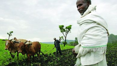 Photo of Corporations, U.S. Join Forces to Aid African Farmers