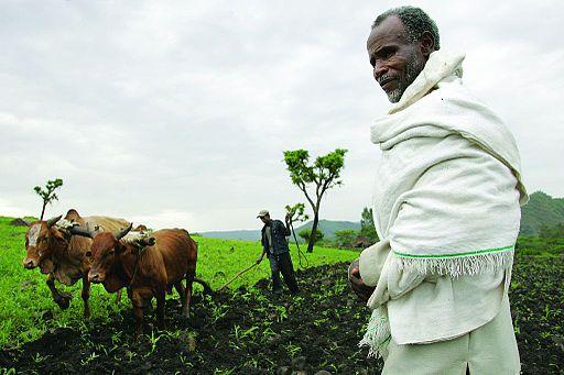 Farmer in Southwest Ethiopia. (Stevie Mann/CCPL 2.0)