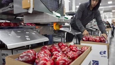 Photo of China Moves to Accept Imports of All US Apple Varieties