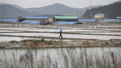 Photo of Freed South Korean Salt Farm Slaves Struggle to Move On