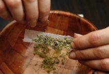 Photo of Marijuana: Boys Who Smoke Cannabis Are 4-Inches Shorter, Study Says