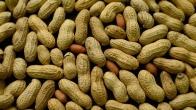 Photo of Nuts Are a Nutritional Powerhouse