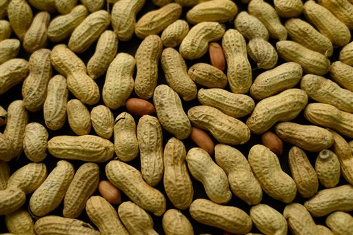 This Feb. 20, 2015, photo shows an arrangement of peanuts in New York. For years, parents of babies who seem likely to develop a peanut allergy have gone to extremes to keep them away from peanut-based foods. Now, a major study suggests that is exactly the wrong thing to do. (AP Photo/Patrick Sison)