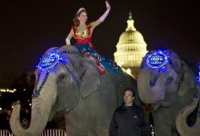 Photo of Ringling Bros. Says Circuses to be Elephant-Free in 3 Years