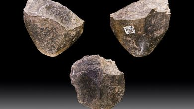 Photo of Scientists Unearth 3.3M-Year-Old Tools