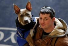 Photo of Service Dogs That Detect Seizures Make Life Easier To Kids With Disabilities