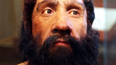 Photo of Ancient DNA Reveals How Europeans Developed Light Skin and Lactose Tolerance