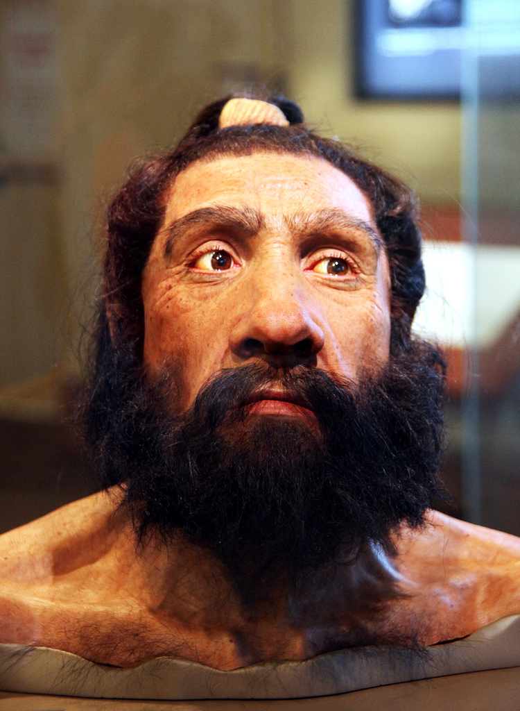 Homo neanderthalensis adult male - head model - Smithsonian Museum of Natural History (Tim Evanson/Flickr/CC BY-SA 2.0)