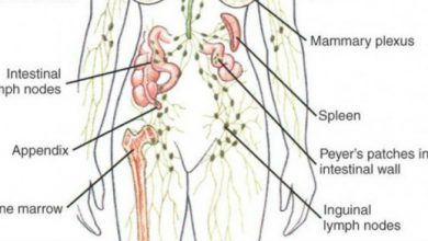 Photo of The 3 Most Important Actions You Need To Take Daily To Drain Your Lymph Fluids