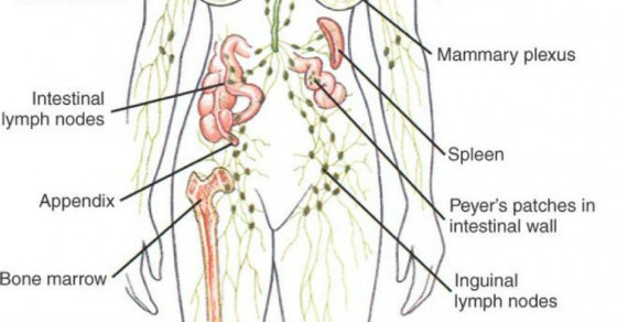 lymphatic-system-how-to-drain