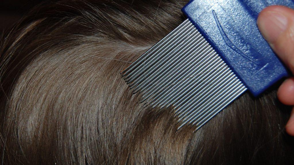 head+lice.mgn
