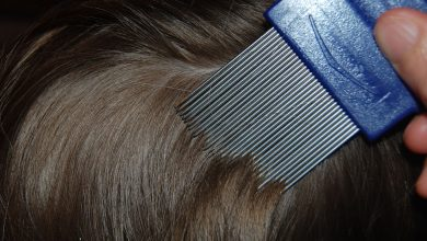 Photo of Lice Resistant to Common Treatments in Many States