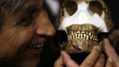 Photo of South Africa's New Human Ancestor Sparks Racial Row