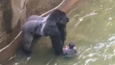 Photo of Michelle Gregg Won't Face Charges in Cincinnati Zoo Accident