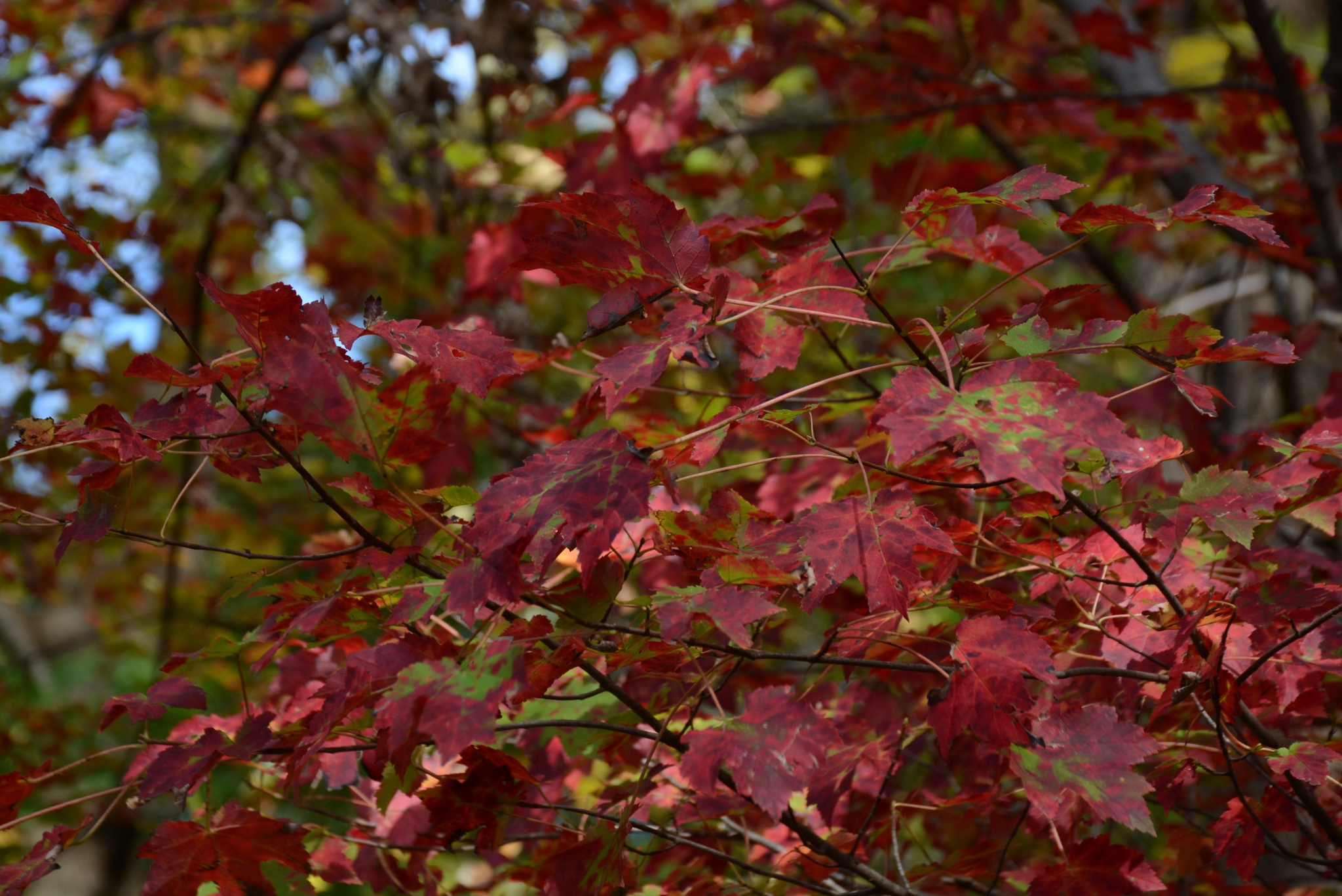 Photo of Fall Colors …