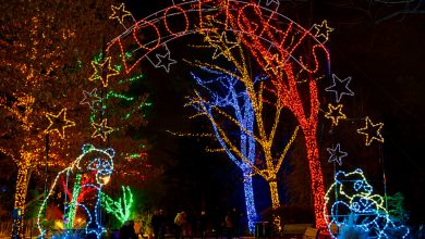 Photo of Tips for Best Holiday Light Shows