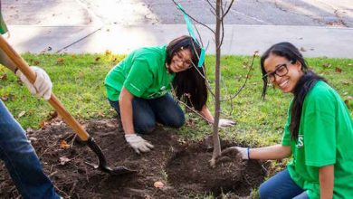 Photo of Pepco Providing 1,150 Free Trees to Customers