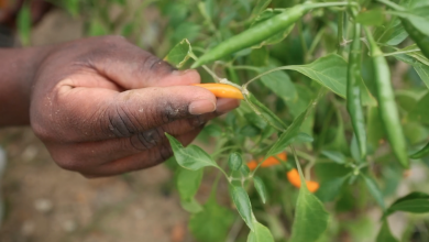 Photo of Farm Produces Solutions for Urban Challenges