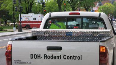 Photo of D.C. Steps Up Rat Abatement Program