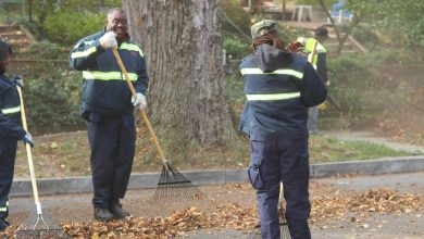 Photo of Leaf Collection Begins in D.C.