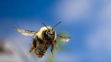 Photo of THE RELIGION CORNER: How Can a Bumblebee Fly?