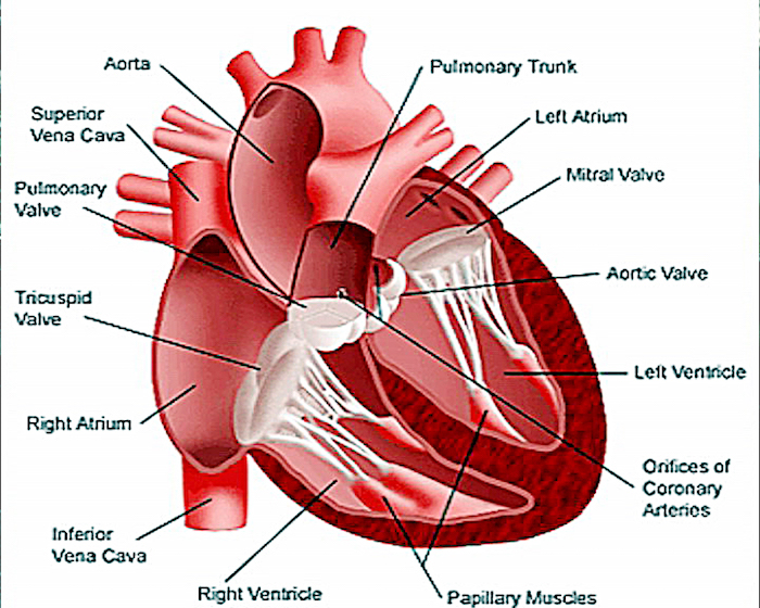 Photo of Medical Professionals Raise Awareness to Heart Valve Disease