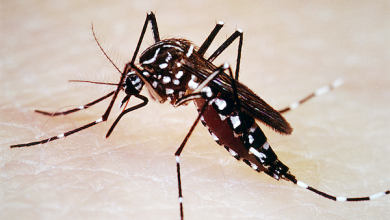 Photo of D.C. Ranked Third for Most Mosquitoes