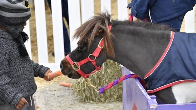 Photo of Annual Horse Show Brings Family Fun