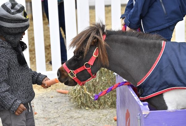 """A youngster feeds """"Mini Cooper"""" during the 2016 Washington International Horse Show's """"Kids Day"""" in downtown D.C. (Alden Corrigan/WIHS)"""