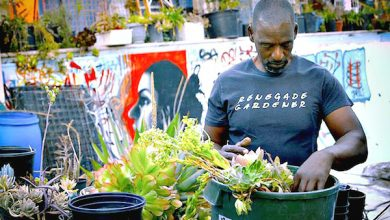 Photo of Blacks, Minorities Encouraged to Apply for UDC Gardener Program