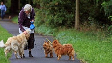 Photo of 10 Ways Dogs and Seniors Can Help One Another