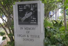 Photo of Need for Organ and Tissue Donors Greater than Ever; Waiting List Grows