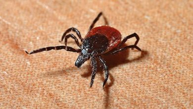 Photo of Expert Tips for Lyme Disease Prevention During Tick Season