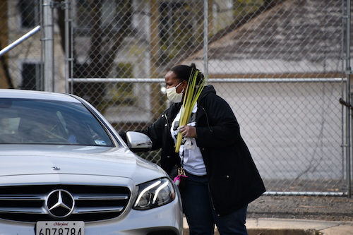A member of Allen AME Church in southeast D.C. hands out palms to members who drove up in cars on April 5, which was Palm Sunday. (Anthony Tilghman/The Washington Informer)