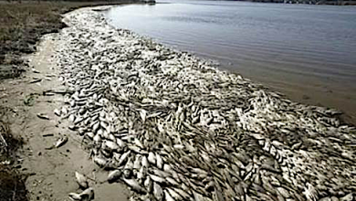 Photo of Massive Die-Off of Fish on Nigerian Coastline Linked to Toxic Discharge