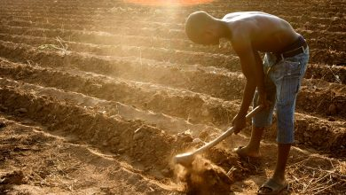 Photo of Farming Lures Back Young People in Africa