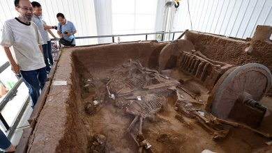 Photo of Archaeologists trot out restored bronze chariot buried with horses