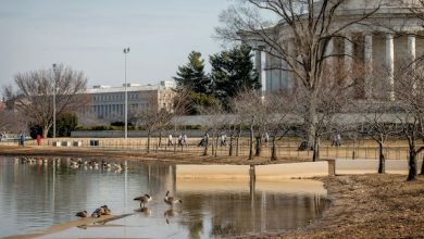 Photo of The Tidal Basin Is Sinking; Experts Pitch Ideas to Save It