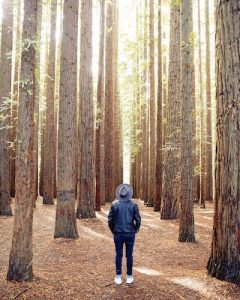 A June episode of #TakeTimeThursday explored the Japanese art of shirin-yoku, or forest bathing, and filmed the show amongst the trees. It was because of this program that international audiences to start tuning in. (Photo by Heidi Fin on Unsplash)