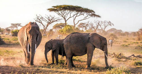 Unavoidable in Kenya's capital city is the famed African safaris — after all, the city lays claim as the continent's safari capital. (NNPA Newswire)