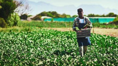 Photo of After a Century of Land Theft and Exclusion, Black Farmers Getting Needed Government Aid
