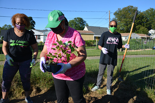 Members of Psi Epsilon Omega Chapter of Alpha Kappa Alpha Sorority, Inc. plant potatoes to help food-insecure families in Prince George's County. They will harvest the potatoes this fall and donate them to a food pantry.