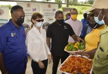 Minister of Agriculture and Fisheries Floyd Green (third left) looks at sweet peppers and cherry tomatoes being shown to him by farmers Kerise Mighty (second right) and Charles Townsend (right) during a tour of the Greenhouse Cluster and Water Harvesting Project at Content in Williamsfield, Manchester, on July 22.